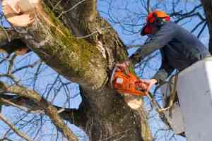 Tree Care Tips in Perth