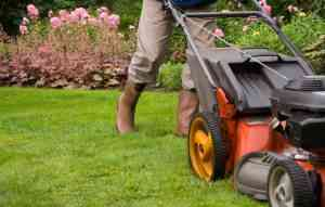 Lawn Care in Minnesota