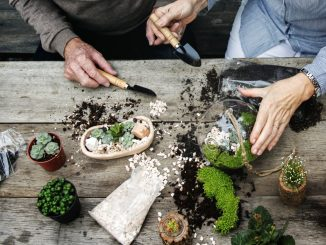 Couple making miniature plants