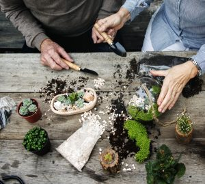 Couple making miniature plants