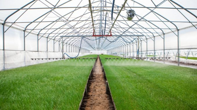 Your First Greenhouse