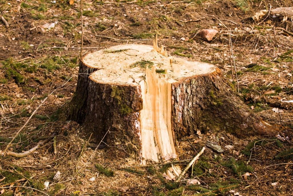 Photo of a tree stump