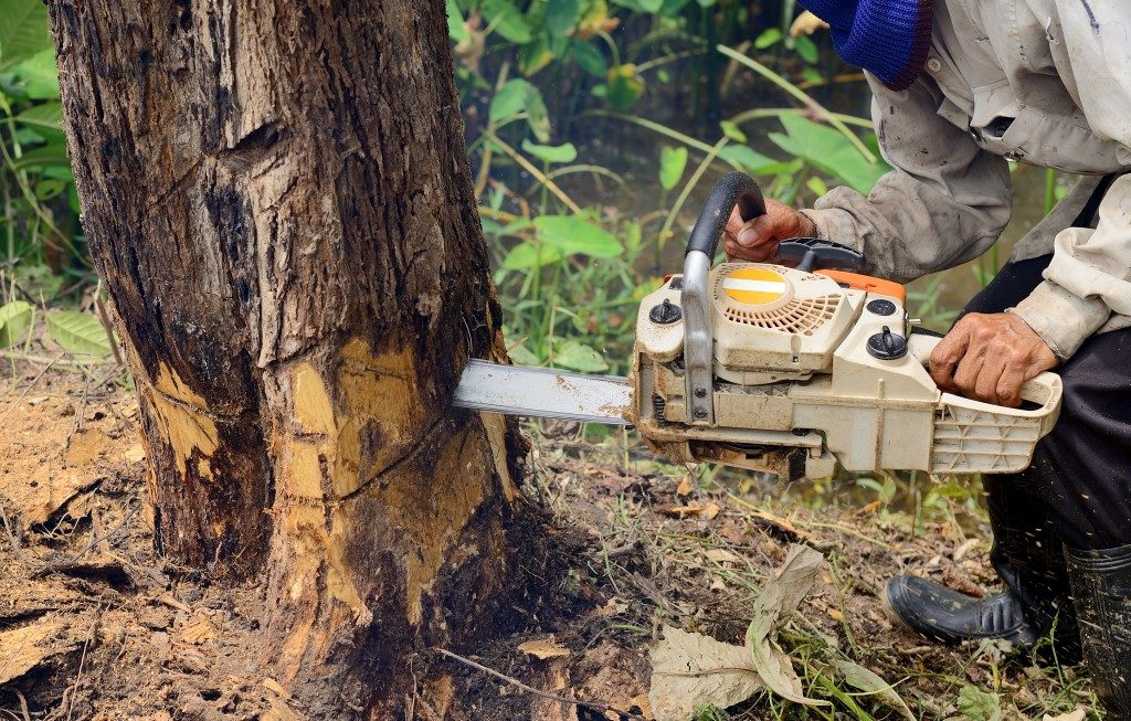 Man with chainsaw cutting a tree