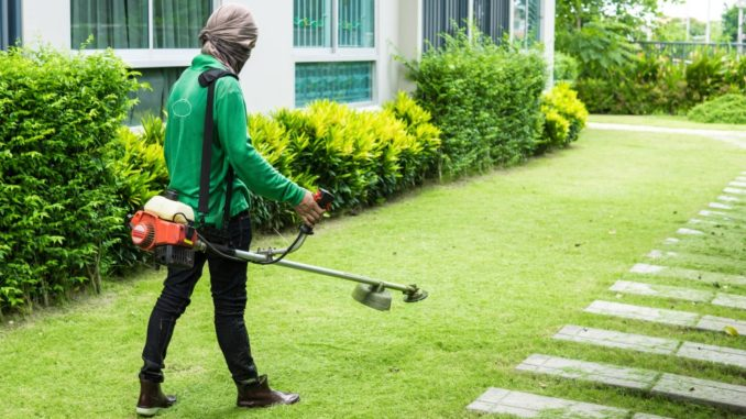 worker trimming the grass