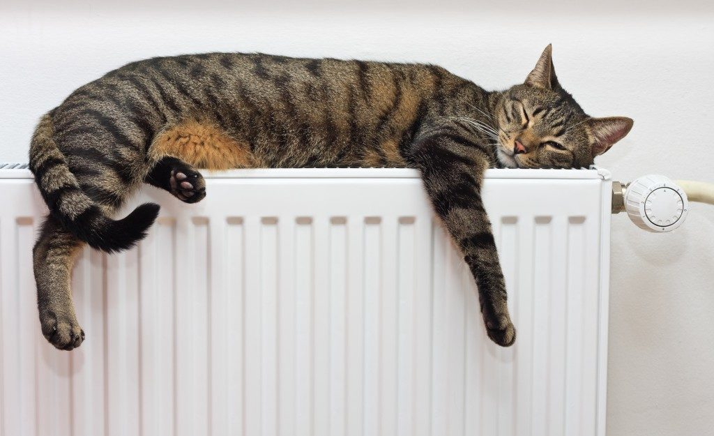 A tiger (tabby) cat relaxing on a warm radiator
