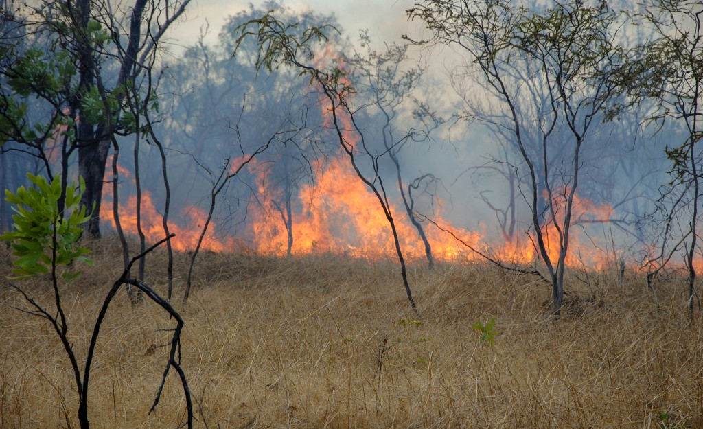 active bushfire in the forest